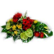 coussin amaryllis