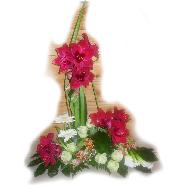 devant cercueil amaryllis