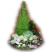 couronne plantes et fleurs coupées