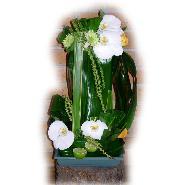 tour de feuillages et orchidees