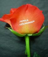 """rose marquée """"joyeux anniveraire"""""""