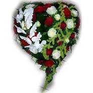 coeur blanc et rouge phalaenopsis