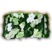 livre blanc et vert