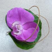 boutonniére phalaenopsis