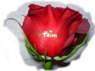 rose individuelle marquée 70 cm