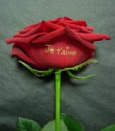 """rose marquée """"je t'aime"""""""