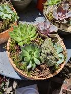 Coupe succulentes