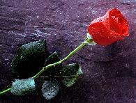 rose rouge 40 cm